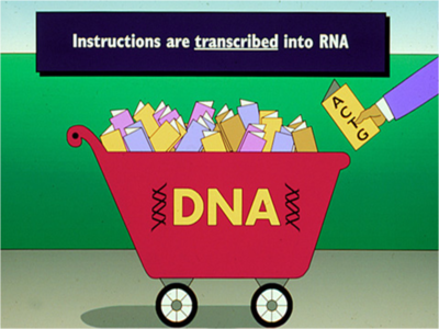 Illustration showing a cart full of DNA sending instructions to RNA.