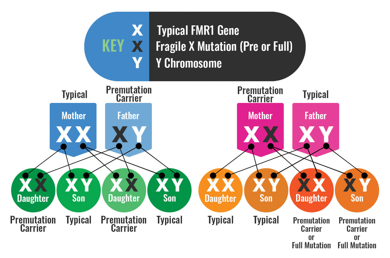 Genetic inheritance of the FMR1 gene