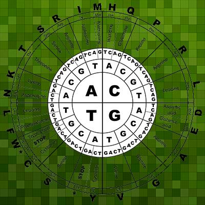 CGAT wheel